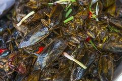 Zikadenteller briet im Öl in Kambodscha Ostasien stockbild