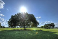 Zilker Park, Austin, Texas Stock Photography