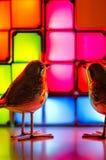 Zilver, model robins op een heldere feestelijke achtergrond Stock Afbeelding