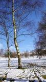 Zilverberkbomen in de sneeuw in Derbyshire, het UK royalty-vrije stock foto