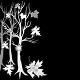 Zilveren boomesdoorn op zwarte achtergrond Stock Foto