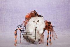 Zilveren Chinchillakatje die Halloween-de zitting van de heksenhoed binnen het metaalmand van de spinvorm dragen Royalty-vrije Stock Afbeeldingen