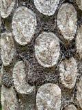 Zilveren Fern Tree Stock Fotografie