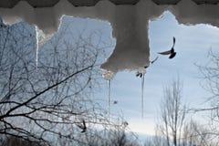 Zilveren ijskegels en het stijgen vogels stock foto