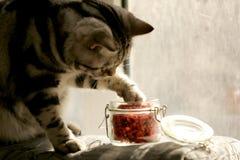 Zilveren kat Stock Foto's
