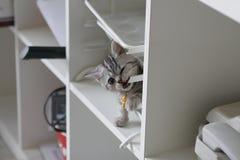 Zilveren kat Stock Foto