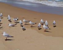 Zilveren meeuwen te de waterkant van de oceaan Royalty-vrije Stock Afbeelding