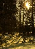 zimą słońce fotografia stock
