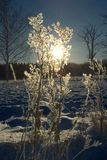 zimą słońce Zdjęcia Royalty Free