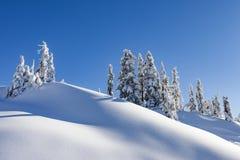 Zim Śnieżyści drzewa na górze Obrazy Royalty Free
