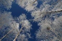 Zim śnieżyste brzozy Rosja, po tym jak zamraża deszcz obrazy royalty free