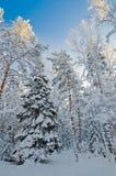 Zim śniegi zakrywający drzewa przeciw niebieskiemu niebu Obrazy Stock