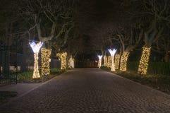 Zim bożych narodzeń iluminacja przy nocą w Oliwa parku w Gdańskim Obraz Stock