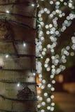Zim Czarodziejscy światła na drzewie Fotografia Royalty Free