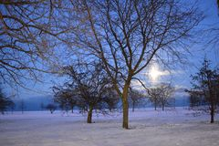 Zim drewna Obrazy Royalty Free