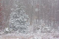 Zim drewna Zdjęcia Stock