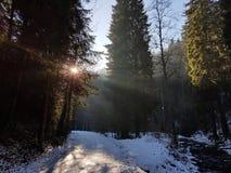 Zim drewna Zdjęcia Royalty Free