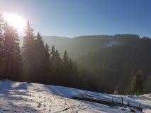 Zim drewna Zdjęcie Stock