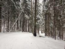 Zim drewna blisko Moskwa, Rosja Zdjęcia Royalty Free