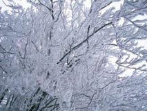 Zim drzew tło Fotografia Royalty Free