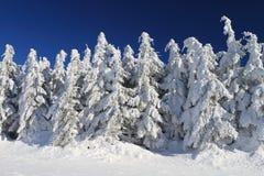 Zim drzewa Zdjęcia Royalty Free