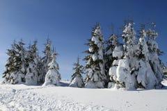 Zim drzewa Zdjęcie Stock