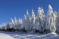 Zim drzewa Obrazy Royalty Free