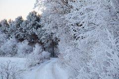 Zim drzewa Zdjęcie Royalty Free