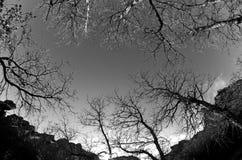 Zim drzewa Fotografia Royalty Free