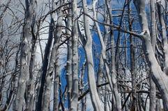Zim drzewa Obraz Stock