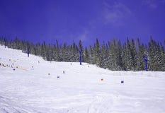 Zim drzewa i ziemia Zdjęcia Royalty Free