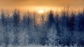 Zim drzewa na wschodzie słońca fotografia stock