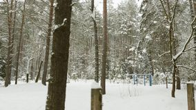 Zim drzewa pod śniegiem, lata strzał w lesie zbiory