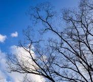 Zim drzewa przy parkiem w Himeji, Japonia Obrazy Stock