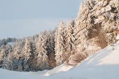 Zim drzewa rozjaśniają ranku słońcem Zdjęcie Stock