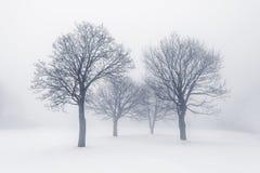 Zim drzewa w mgle Fotografia Royalty Free