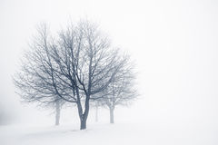 Zim drzewa w mgle Obrazy Stock