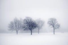Zim drzewa w mgle Zdjęcia Royalty Free