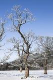 Zim drzewa w Strathdon w średniogórzach Szkocja Obrazy Stock