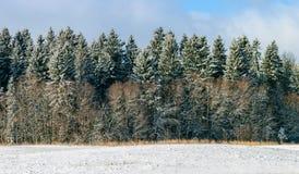 Zim drzewa zakrywający z świeżym śniegiem Zdjęcia Royalty Free