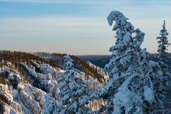 Zim gór krajobraz z drzewami i niebieskim niebem fotografia stock