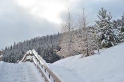 Zim jedlinowych drzew śnieg zakrywający tło Obraz Stock