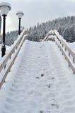 Zim jedlinowych drzew śnieg zakrywający tło Zdjęcia Royalty Free