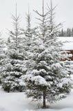 Zim jedlinowych drzew śnieg zakrywający tło Fotografia Stock
