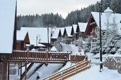 Zim jedlinowych drzew śnieg zakrywający tło Obraz Royalty Free