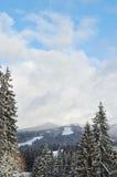 Zim jedlinowych drzew śnieg zakrywający tło Fotografia Royalty Free