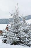 Zim jedlinowych drzew krajobrazowy tło z śniegi zakrywającymi drzewami, kopii przestrzeń Zdjęcie Royalty Free