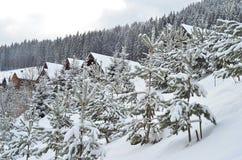 Zim jedlinowych drzew krajobrazowy tło z śniegi zakrywającymi drzewami, kopii przestrzeń Fotografia Stock