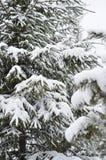 Zim jedlinowych drzew krajobrazowy tło z śniegi zakrywającymi drzewami, kopii przestrzeń Obraz Royalty Free