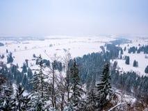 Zim krajobrazowi drzewa sosnowi z pustą przestrzenią dla teksta obrazy stock